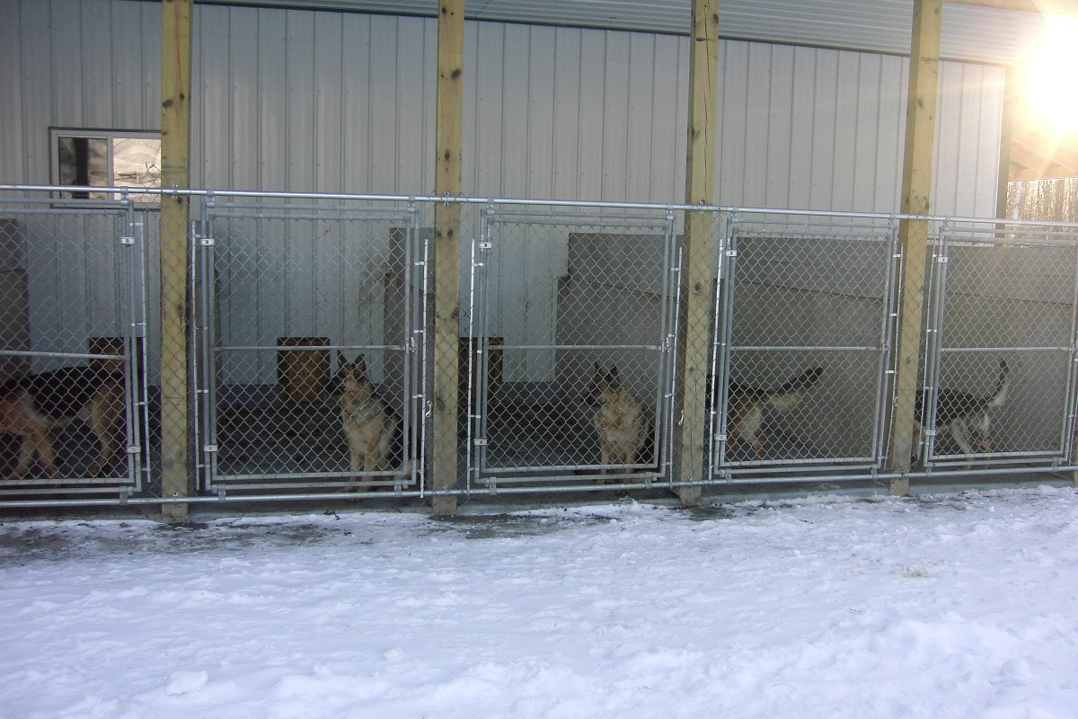 We are also very proud of our newly renovated indoor for What is dog boarding